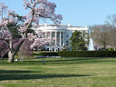 white concrete building near cherry blossom