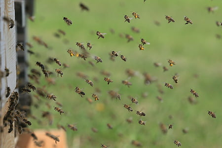 focus photo of yellow and black bees