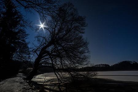 bare tree and lake