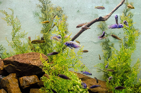 school of blue and brown fishes