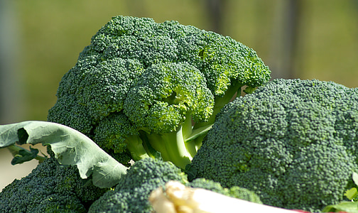 broccoli vegetables