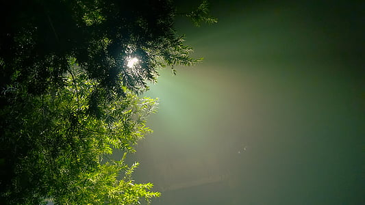 green leafed tree