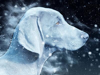 grey dog illustration