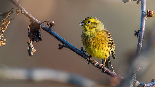 yellow bird on branch of tree