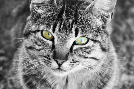 selected focus photo of gray tabby cat