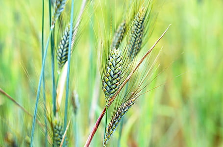 selective focus photography of grains