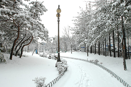 post lamp on street surrounded by trees covered with snow at daytime