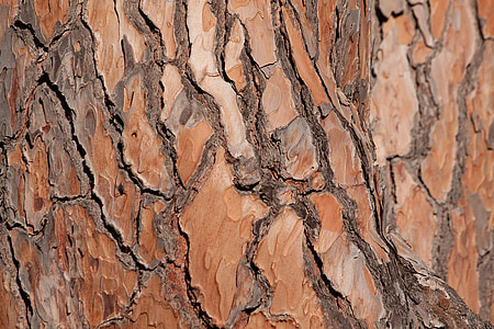bark, tree, pine, tribe, fund, background