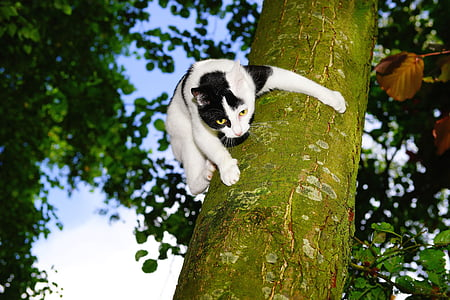 white and black cat on tree trunk