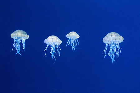four white jelly fishes