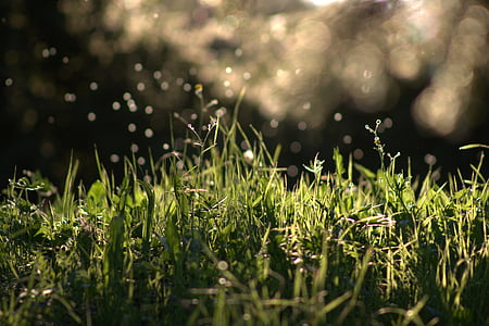 timelapse photography of green grasses and raindrops