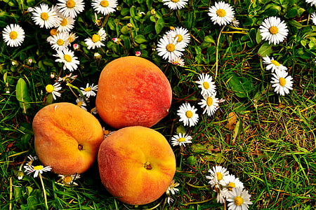 three orange fruits on white and yellow daisies