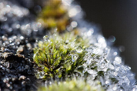 hoarfrost, moss, winter, snow, cold, transition
