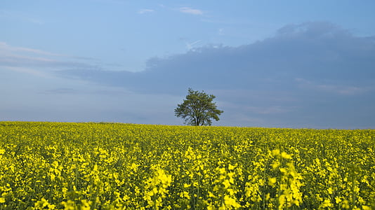 yellow flower field photography during daytime