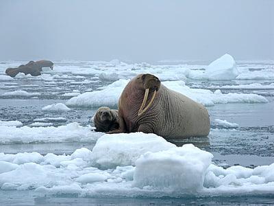 sea lion photography