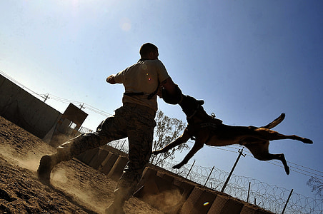 man training the German shepherd