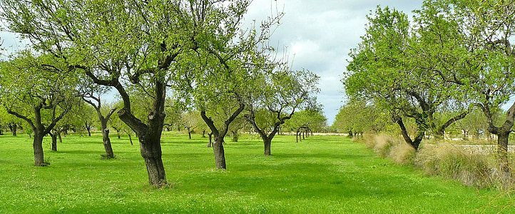landscape photo of green leaf trees