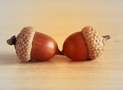 brown acorns