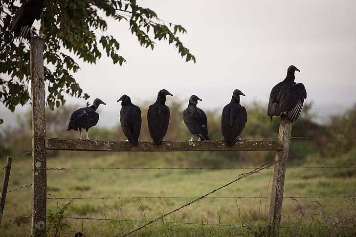 six black birds on the brown wooden gate