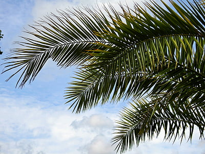 photo of coconut leaves