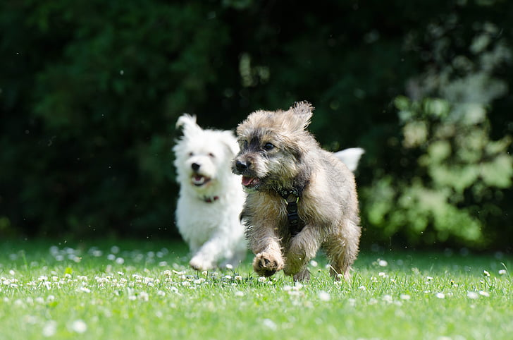 two white and gray puppies running on green grass field at daytime