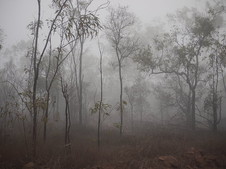 forest with fogs