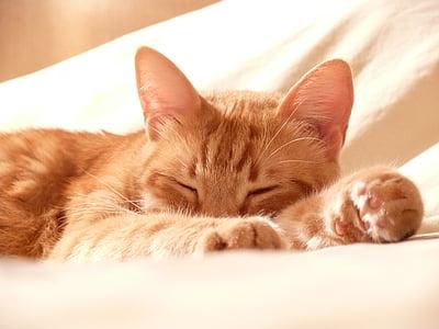 orange tabby kitten on white textile