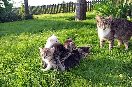 four kittens on green grass near adult cat