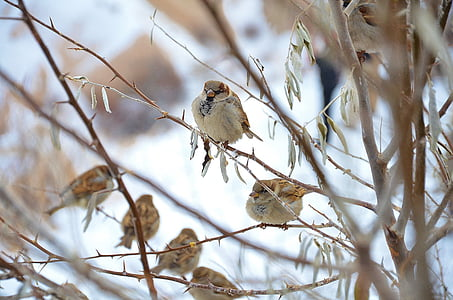 selective focus photography of Eurasian tree sparrows