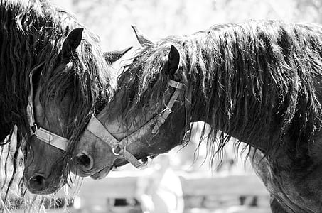 grayscale photography of horse
