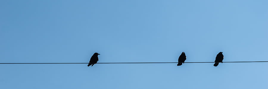 three black birds perched on power line