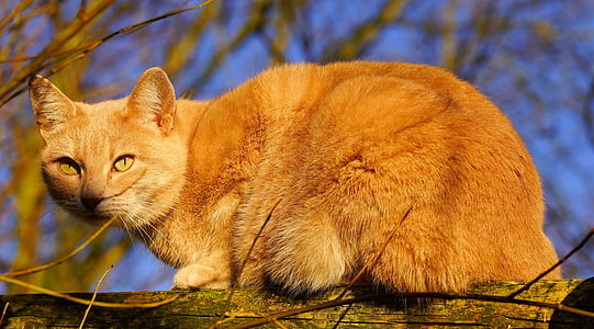orange tabby cat on tree branch