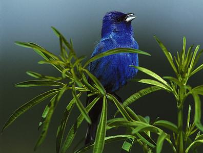 closeup photo of blue bird on green plant