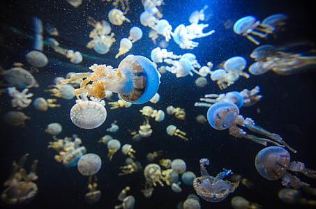 shoal of white jellyfish under water