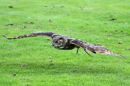 gray owl on grass