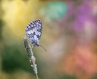 white and gray butterfly perching on green plant in selective focus photography