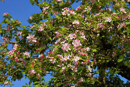 photo of pink flower tree