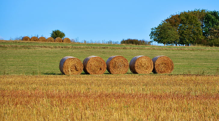 bale of round hays on grass field