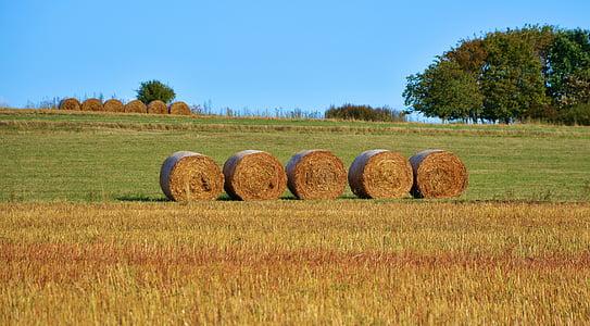 bale of round hays on grass field