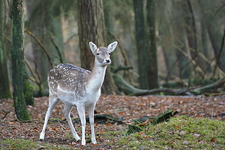 wildlife photography of gray and white deer