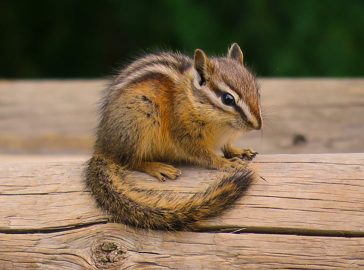 shallow focus photography of squirrel on top of log