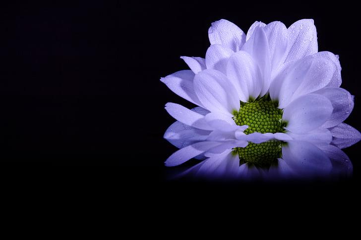 photography of studio light white flower