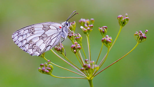 white and gray butterfly perching on pink flower in close-up photography