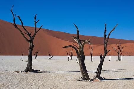 leafless trees in desert dune