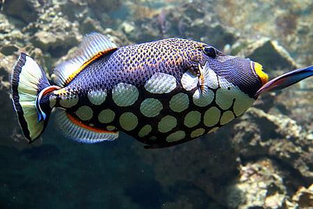 underwater photo of black and white fish
