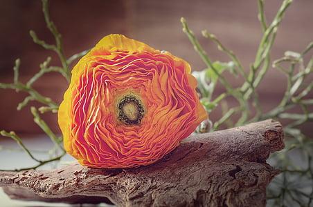 orange petal flower on driftwood