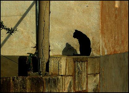 black cat on gray concrete bricks