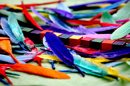 assorted-color feather lot