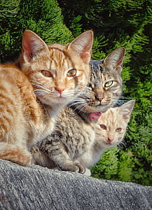 orange and brown Tabby cats on gray surface
