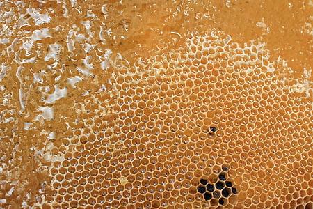 brown honeycomb